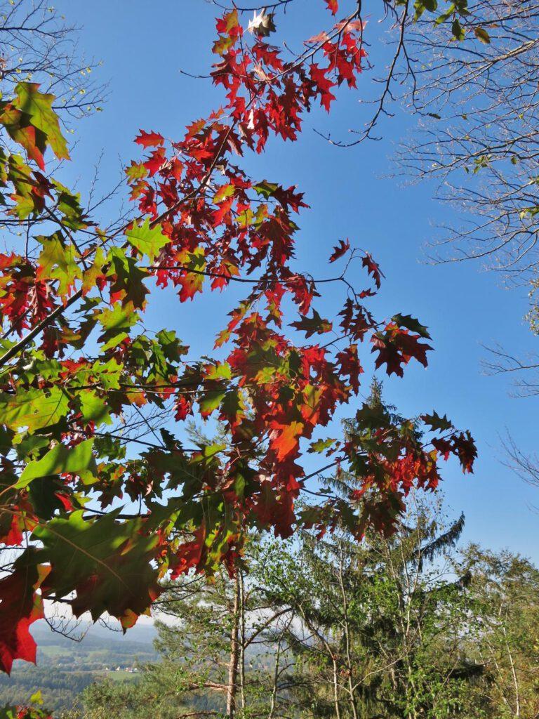 Herbst in der Sächsischen Schweiz