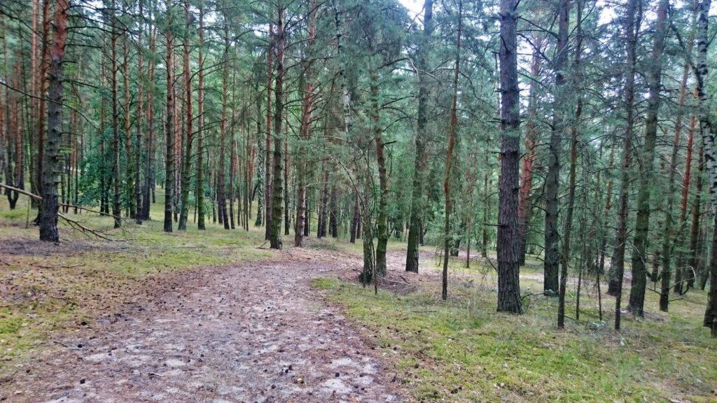 Wanderung in Wald und Stille