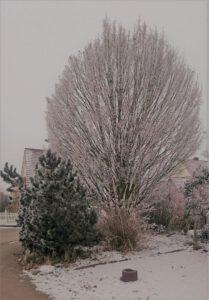 Winter in Ichenhausen