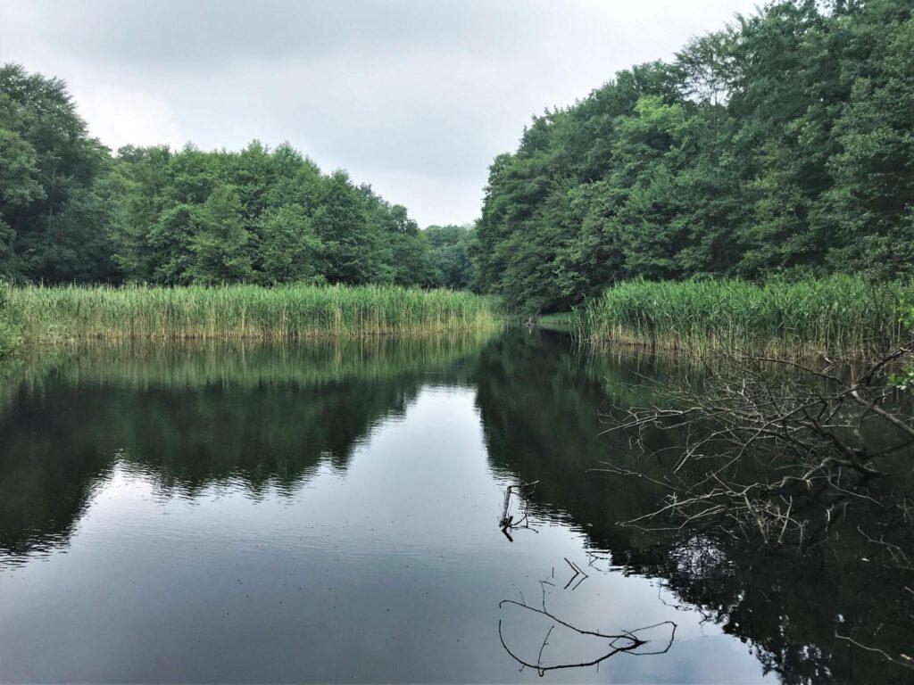 Großer Düsterer Teich im Katharinenholz Potsdam