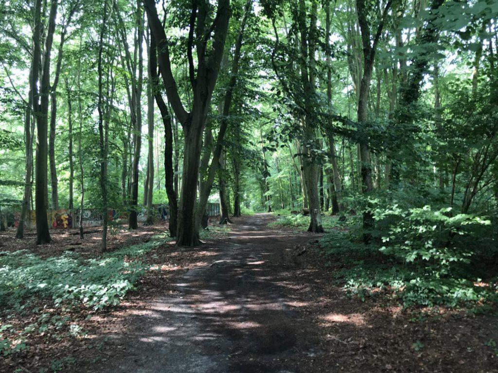 Wanderweg Katharinenholz