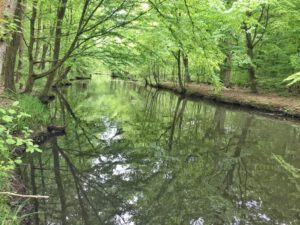 Spreewaldfließ bei Schlepzig